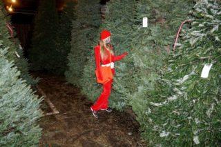 Paris Hilton Shopping a Christmas Tree in Sherman Oaks